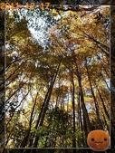 20111217_霞喀羅古道:R0183018.jpg