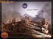20120114_奇幻仿生獸特展:R0183914.jpg