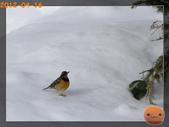 20120413_加拿大10日遊:P4166829.jpg