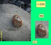 動感石  B:小花狗
