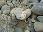 石頭的家 狗狗篇:DSC02582.JPG