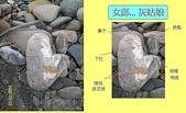 石頭的家  人物篇:100_1849-1.JPG