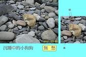 石頭的家 狗狗篇:IMG_3832-1.JPG