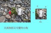 石頭的家 狗狗篇:100_1728-1.JPG