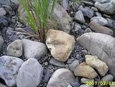 石頭的家 狗狗篇:IMG_3834.JPG