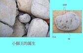 石頭的家 狗狗篇:100_0049.jpg