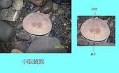 石頭的家  貓咪 鳥兒 :100_0262-1.JPG
