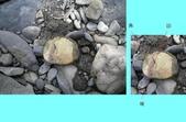 石頭的家  猴子篇:1202918207.jpg