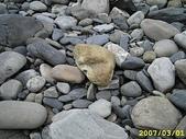 石頭的家  貓咪 鳥兒 :IMG_3832.JPG