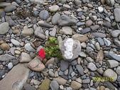 石頭的家  貓咪 鳥兒 :100_1727.jpg