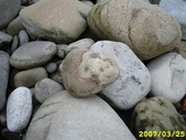 石頭的家  貓咪 鳥兒 :1145782088.jpg