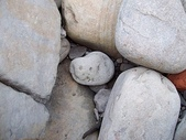 石頭的家  貓咪 鳥兒 :100_0047.jpg