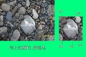 石頭的家  貓咪 鳥兒 :100_2547-1.JPG