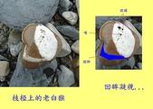 石頭的家 狗狗篇:DSC01605-1.JPG