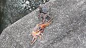蘇澳踏浪行 - 蘇花古道、粉鳥林漁港、澳花瀑布:青蟹與紅蟹