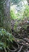 新竹縣 鵝公髻山:盤根